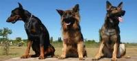 Anuncios de perros en Badajoz