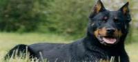 Anuncios de perros en Ambato, Tungurahua