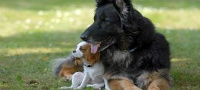 Anuncios de perros en Lauterique, La Paz