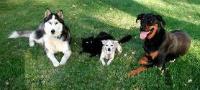 Anuncios de perros en Monteagudo, Chuquisaca