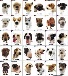 Calexico, California. olx, mundoanuncio. Perros en Calexico, California
